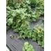 Агротекстиль Agrojutex (Чехия)